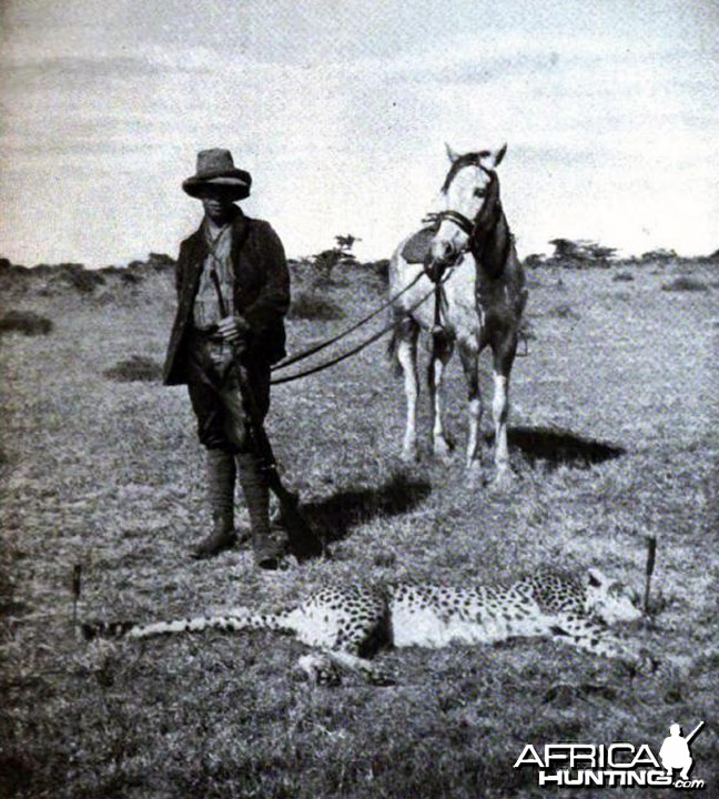 Tarlton and cheetah shot by Kermit Roosevelt