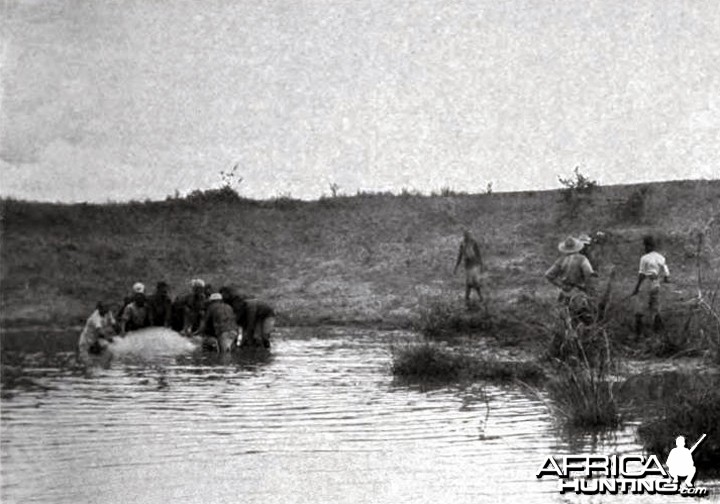 Landing the hippo shot by Theodore Roosevelt