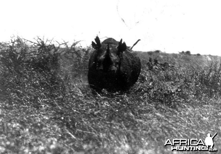 Theodore Roosevelt, black rhino