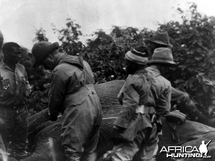 Theodore Roosevelt, measuring elephant