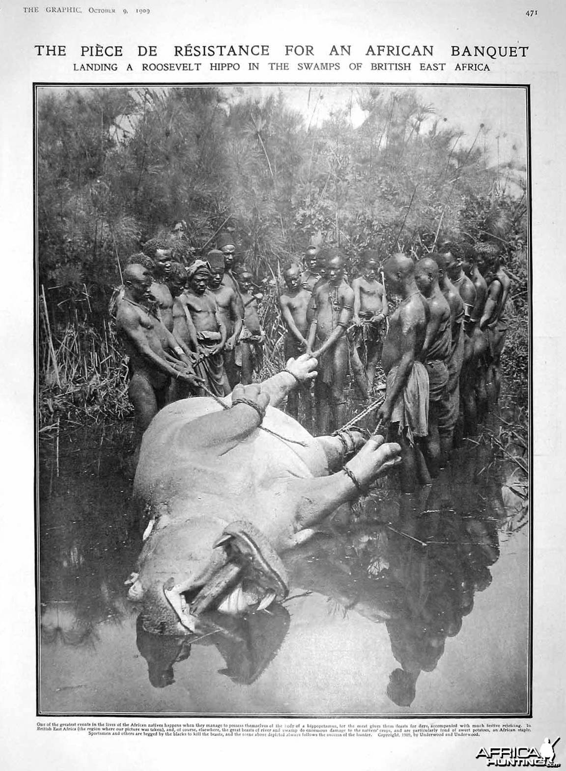 Theodore Roosevelt, dragging hippo out of the water