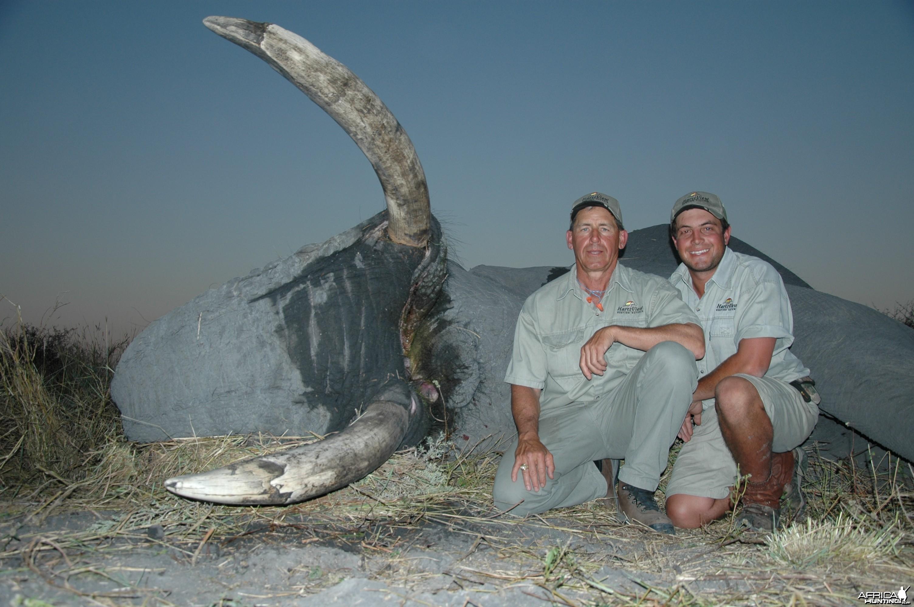 62 Pound Elephant