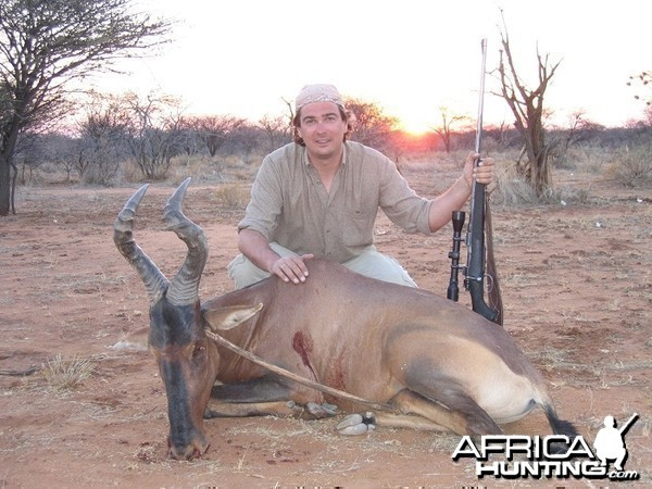 Remember this magnificient red hartebeest!