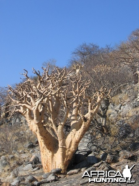 Beauty at Namibian desert