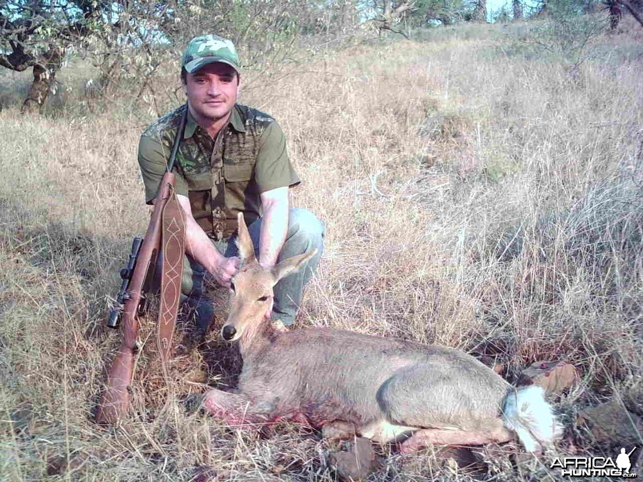 Mountain Reedbuck hunted in South Africa