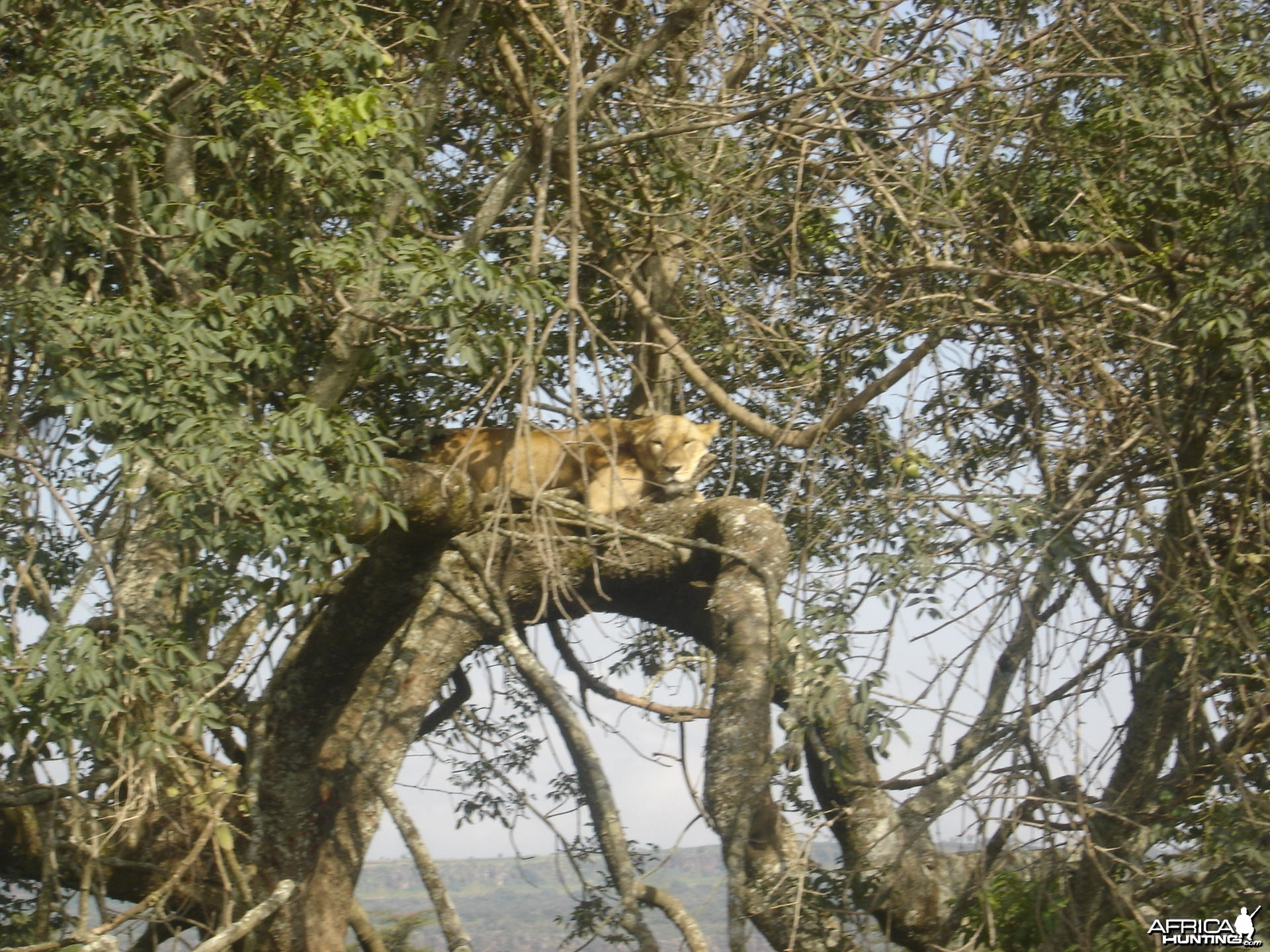 Found this cat resting on my last trip to Kenya