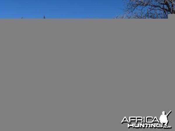 Bowhunting Eland South Africa