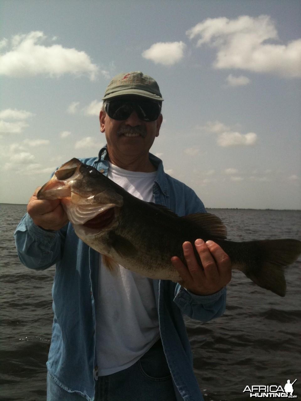 Florida bass