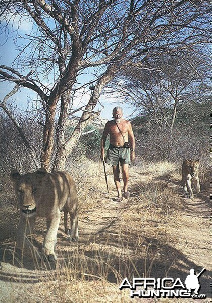 George Adamson walking Lions