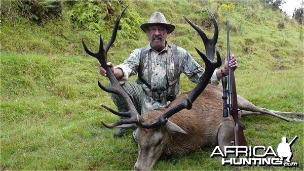 Red Stag New Zealand