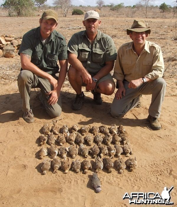Kenya Sandgrouse Shooting