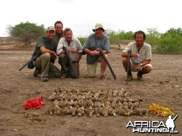 Kenya Sandgrouse Shooting