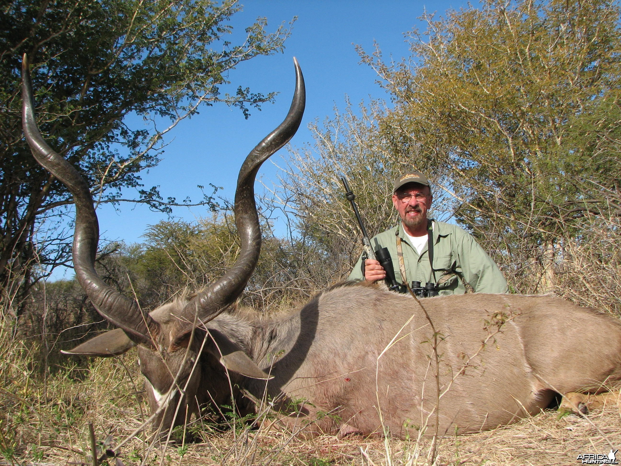 Greater Kudu Bull Limpopo River area SA