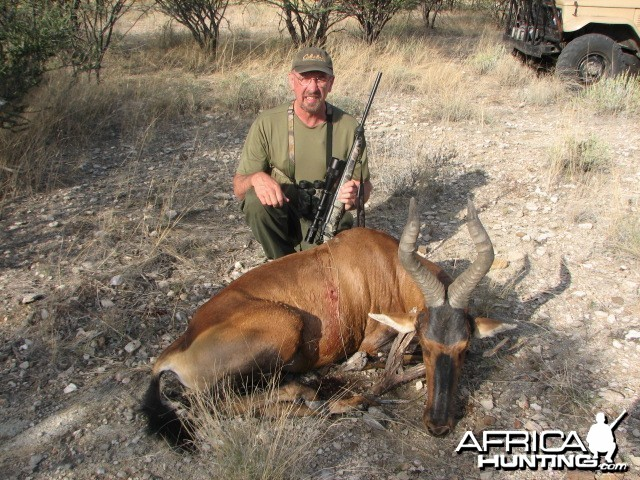 Red Hartebeest Bull Namibia