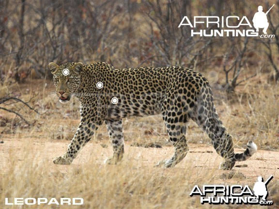 Hunting Leopard Shot Placement