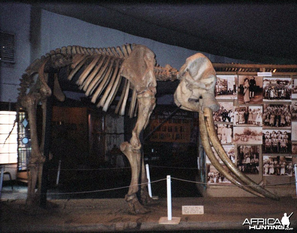 Ahmed the Elephant, Nairobi National Museum, Kenya