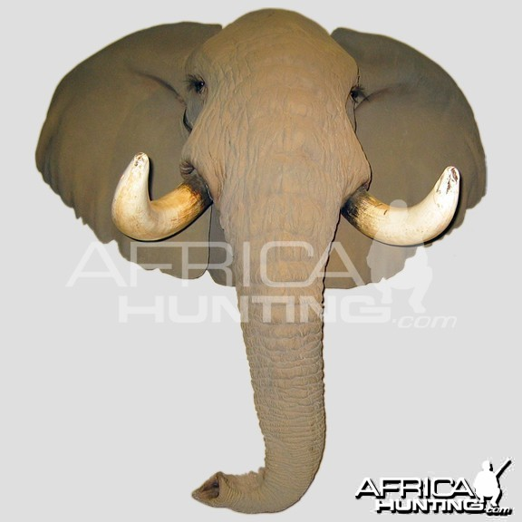 Elephant Head Mount