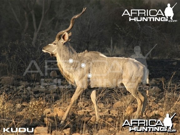 Hunting Kudu Shot Placement