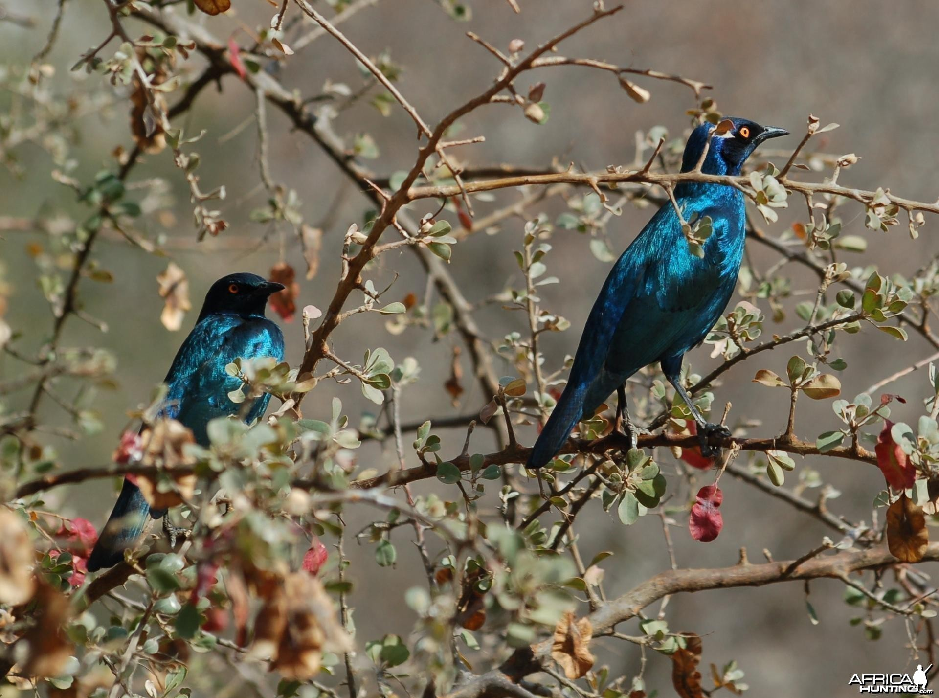 Birds of Africa at Kruger National Park