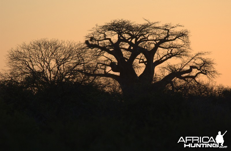 Impressions from Africa