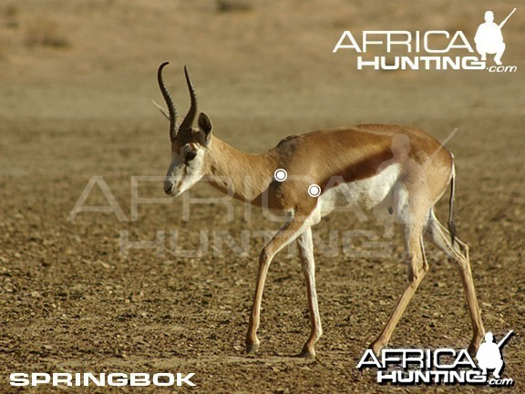 Hunting Springbok Shot Placement