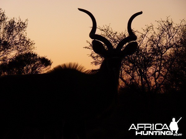 Kudu at sunset