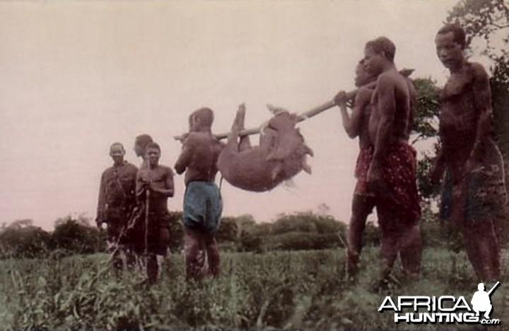Hunting Pig