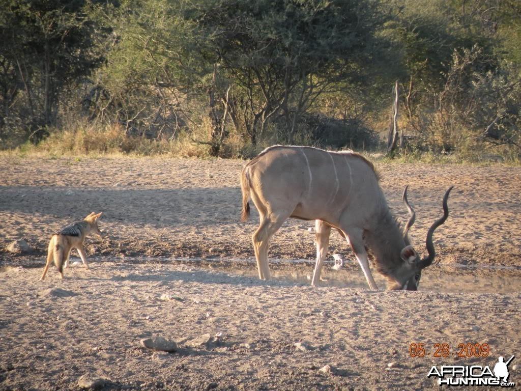 Kudu and Jackal