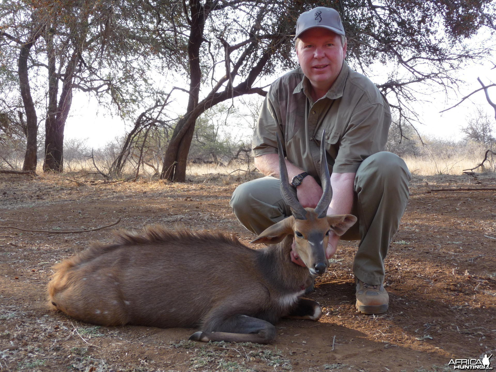 Bushbuck South Africa