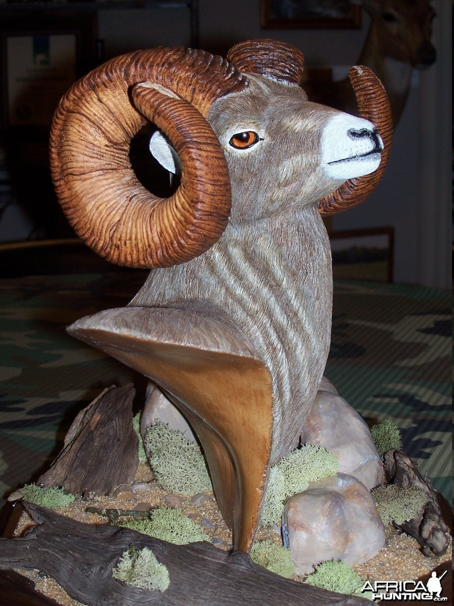 Big Horn Sheep Wood Carving