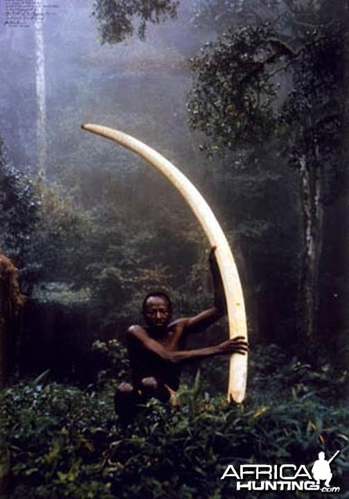 Elui with tusk