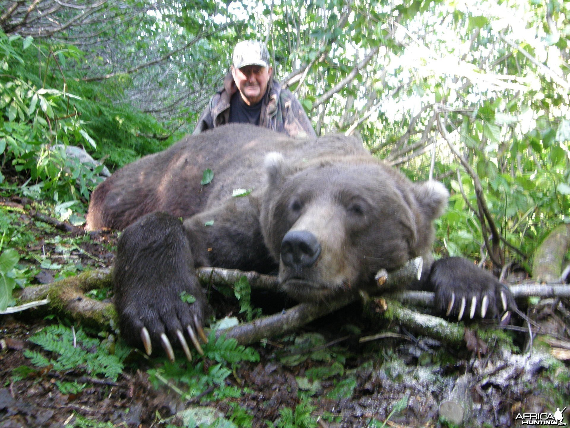 Hunting Brown Bear