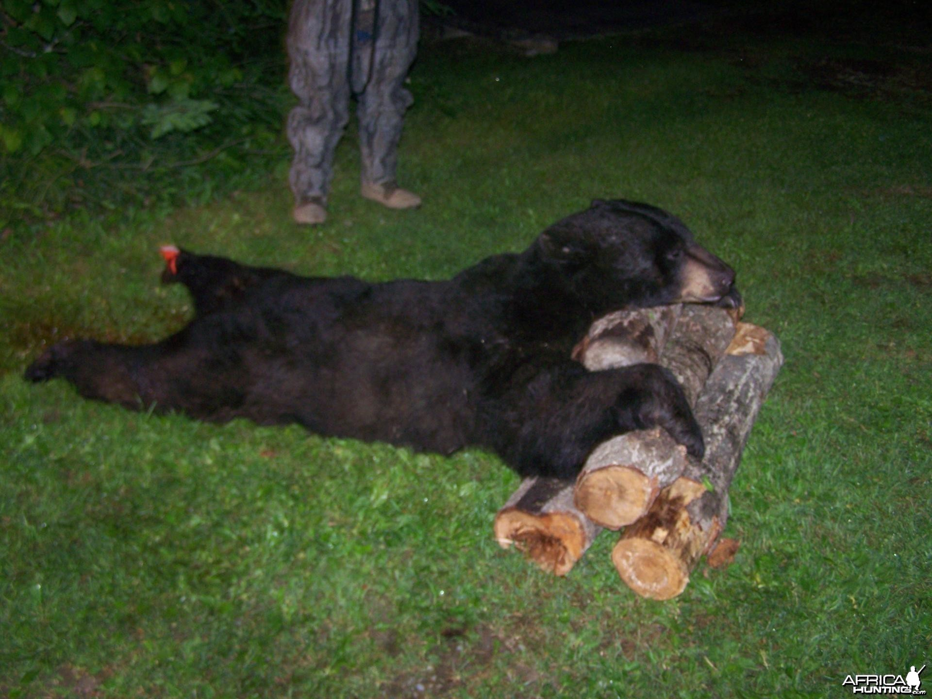 My First Black Bear