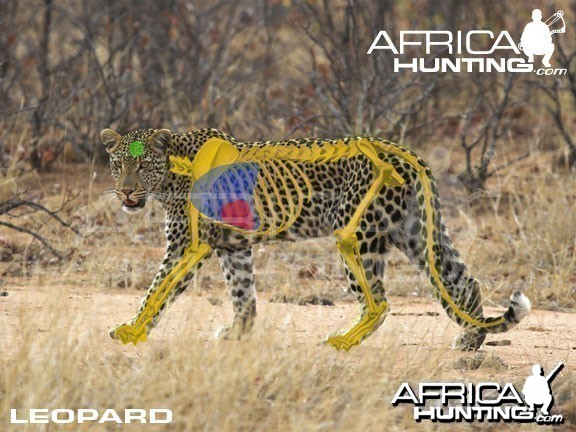 Bowhunting Leopard Shot Placement