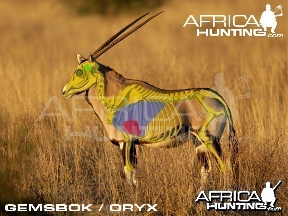 Bowhunting Gemsbok Shot Placement