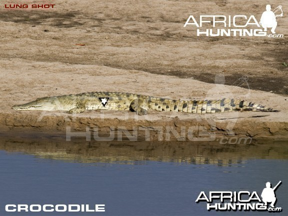 Bowhunting Crocodile Shot Placement