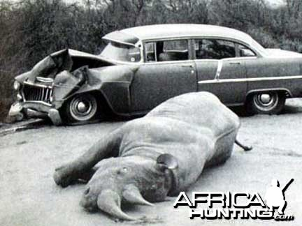 Car vs. Black Rhino