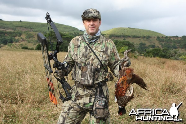 My Pheasant bowhunted in Mauritius with Le Chasseur Mauricien