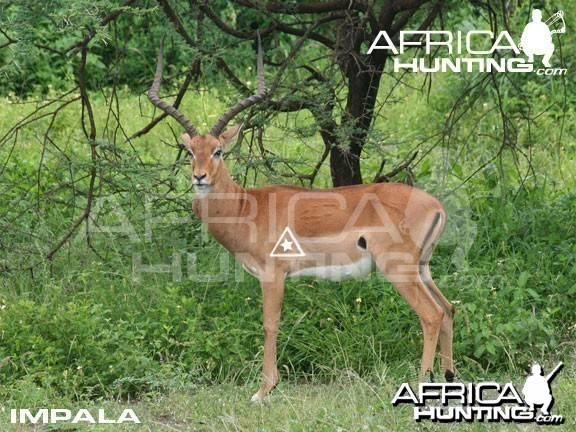 Bowhunting Impala Shot Placement