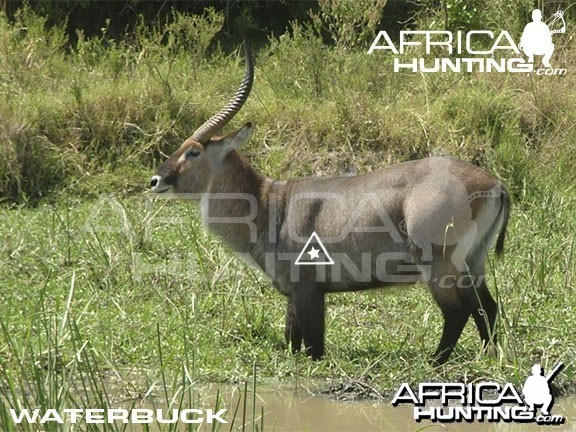 Bowhunting Waterbuck Shot Placement