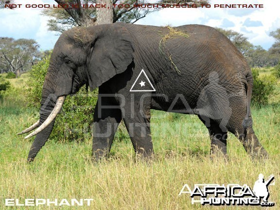 Bowhunting Elephant Shot Placement
