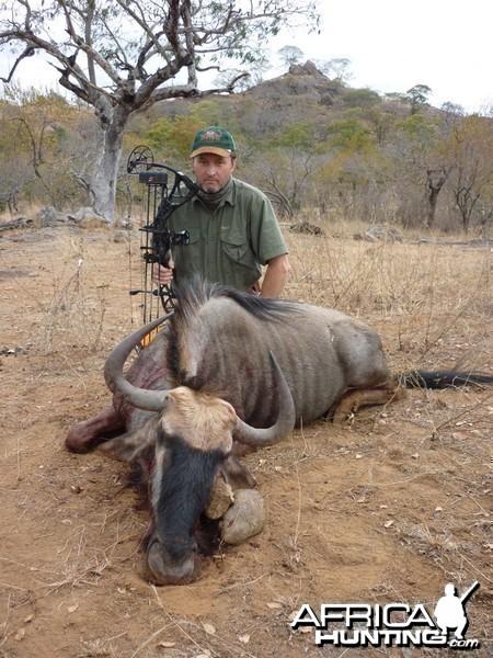 Gnu bowhunt in Zimbabwe