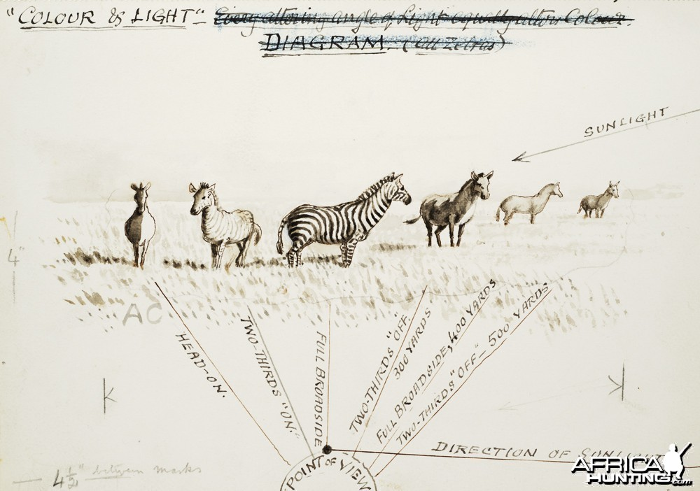 Field sketch made by British hunter and naturalist Abel Chapman