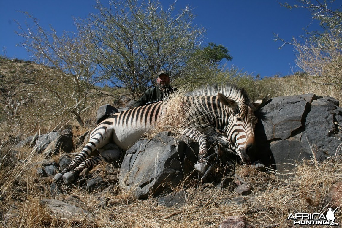Hartmann's Mountain Zebra hunt in Namibia