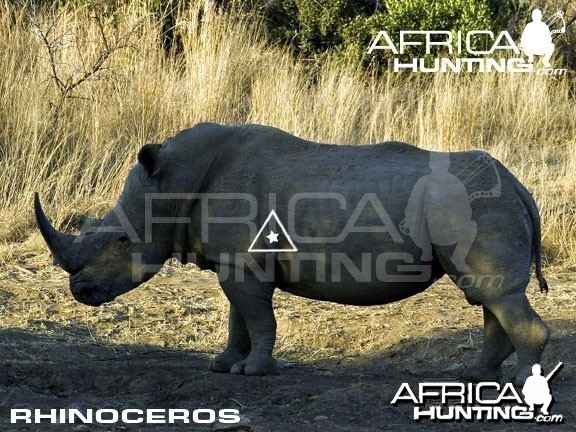 Bowhunting Rhinoceros Shot Placement