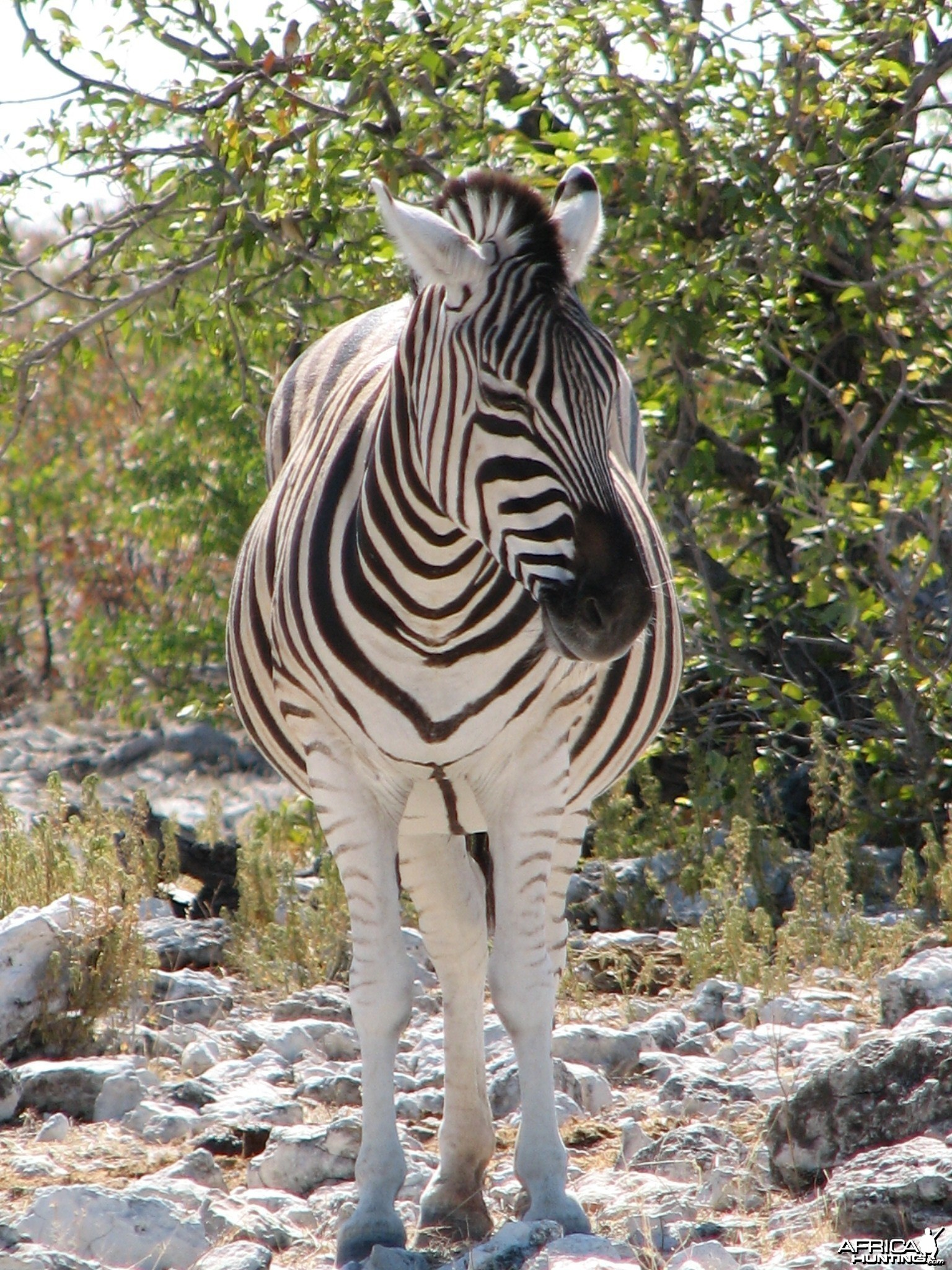 Zebra at Etosha National Park, Namibia