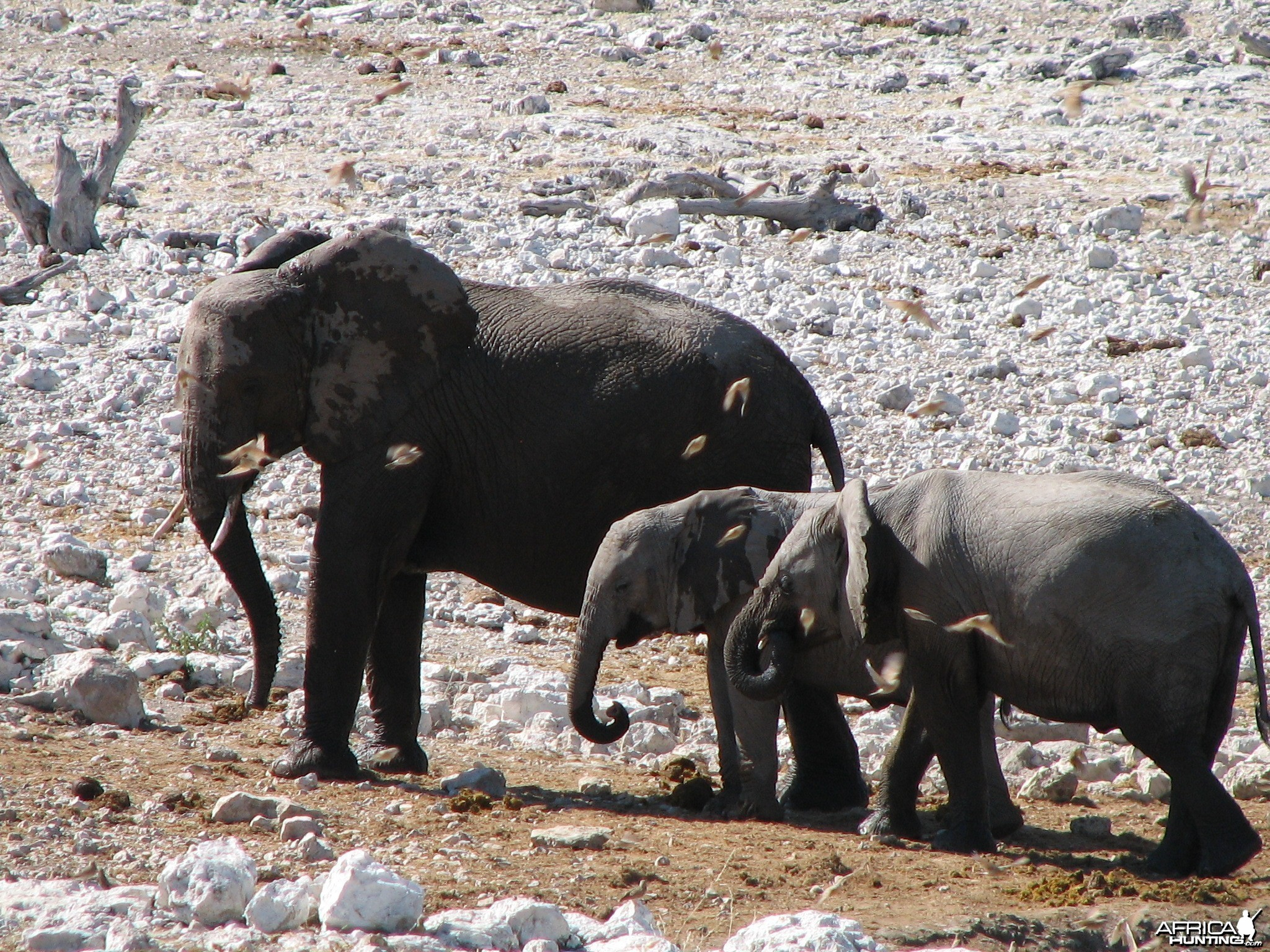 Elephants at Etosha National Park, Namibia