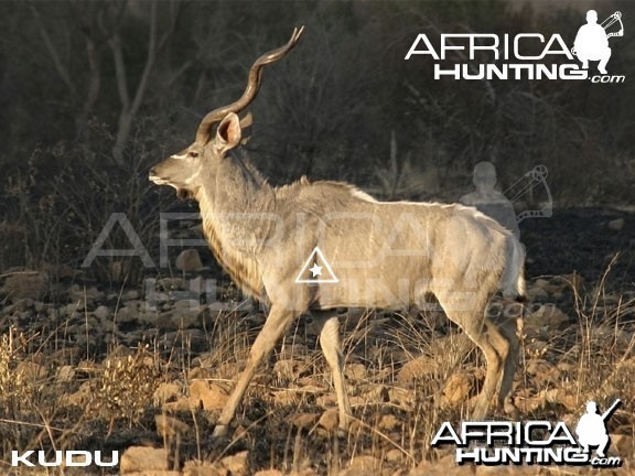 Bowhunting Kudu Shot Placement