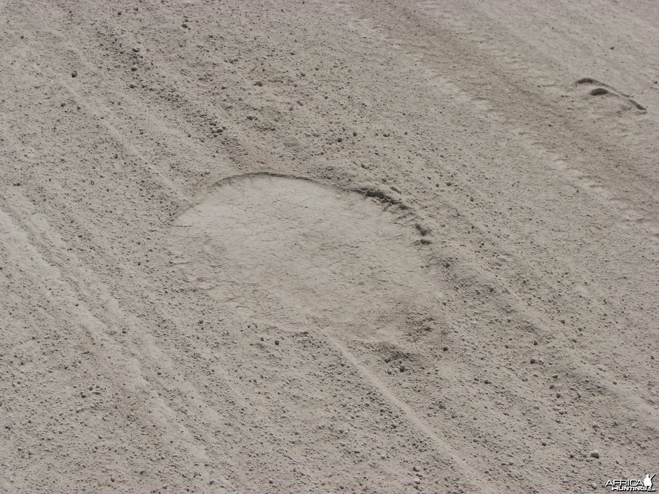 Elephant track at Etosha National Park, Namibia
