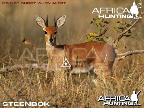 Bowhunting Steenbok Shot Placement
